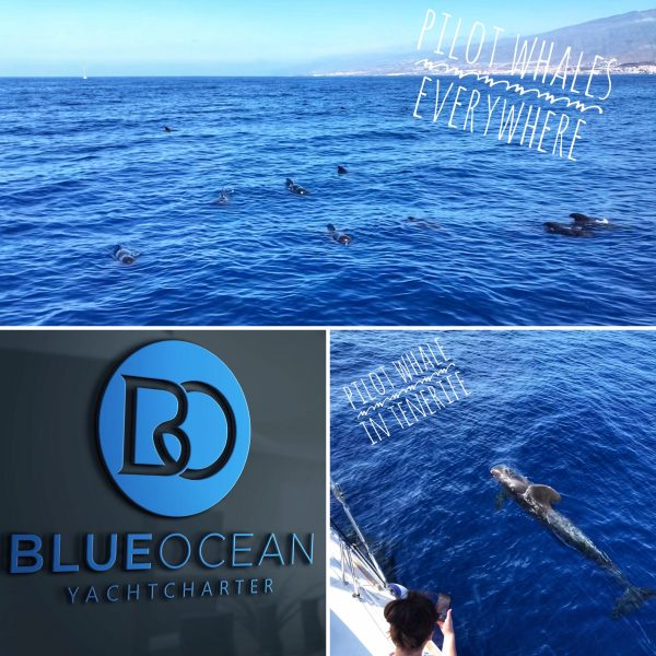 Whale watching in tenerife