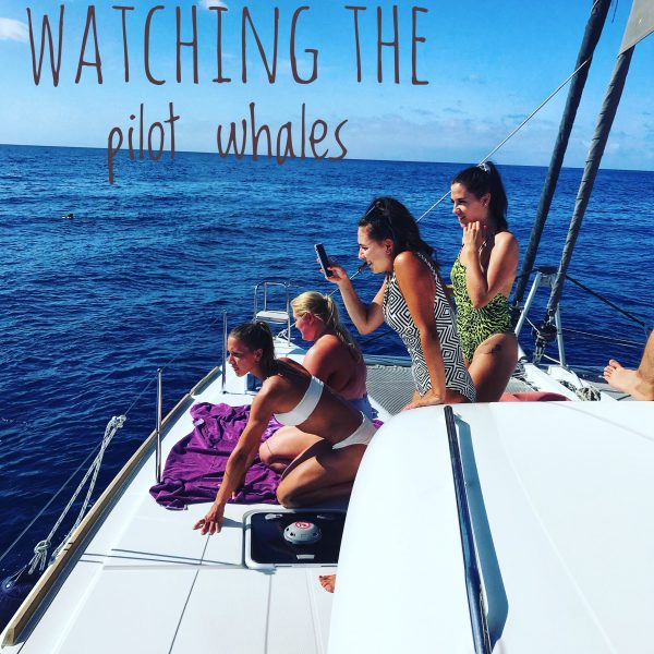 Watching Pilot Whales