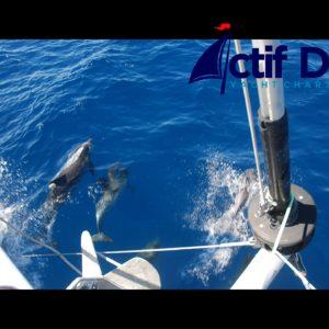 Dolphins Tenerife