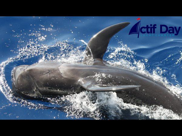 Whales Tenerife