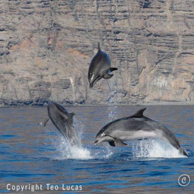 Dolphins Los Gigantes